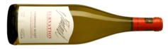 Elevation Chardonnay Musque